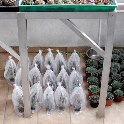 mondeinfluss auf pflanzen